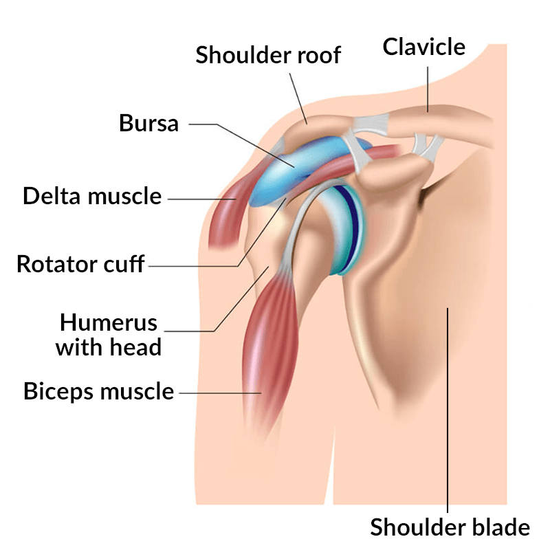An illustration of the shoulder joint.
