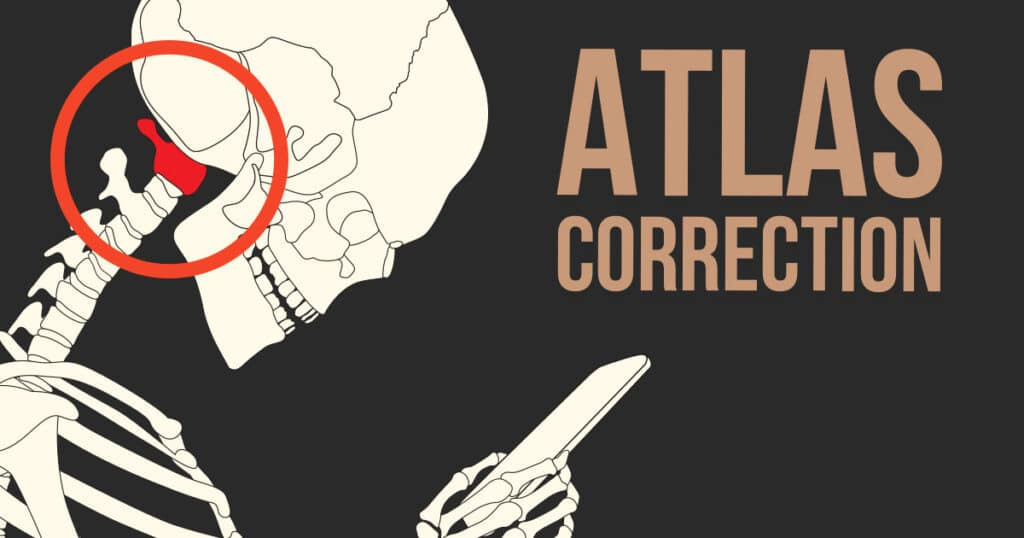 an atlas is shown on a skeleton to underline its position