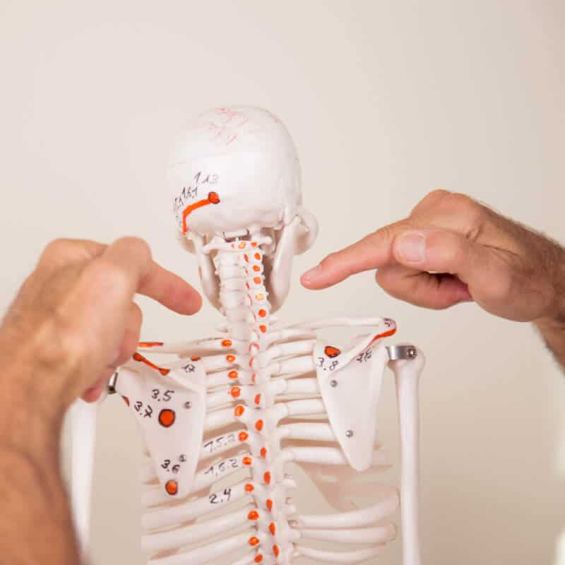 Fingers pointing at a model skeleton.