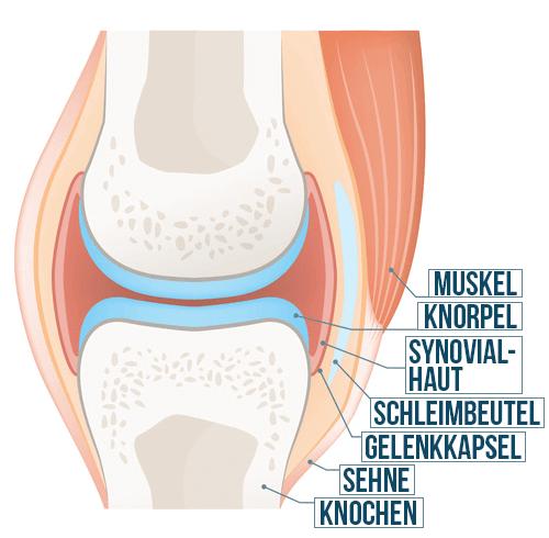 Knie-Gelenk Anatomie