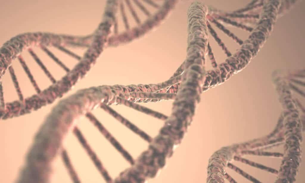 DNA-Strang: Ist Arthrose ein Schicksal der genetischen Veranlagung