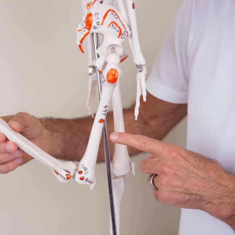 Schmerzspezialist Roland Liebscher-Bracht zeigt am Skelett die Osteopressurpunkte am Bein bei Patellasehnen-Schmerzen