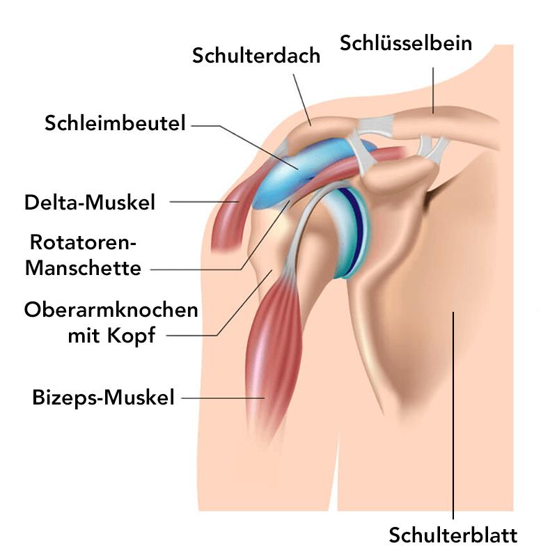 Schulterschmerzen: Ursachen, Behandlung und Übungen | Liebscher & Bracht