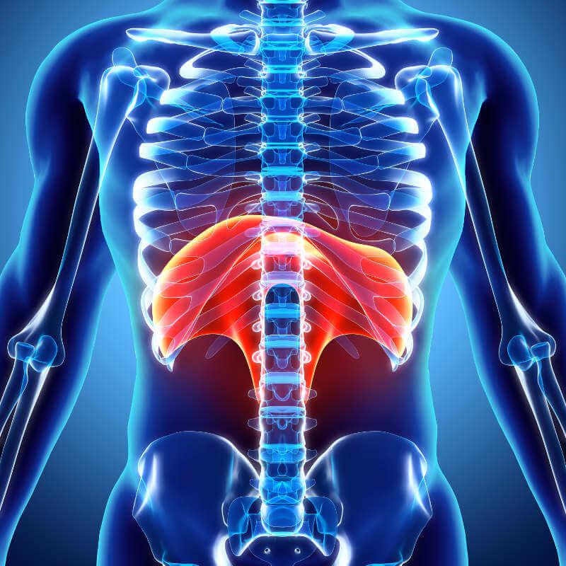 Anatomische Darstellung des Menschen mit Hervorhebung des Zwerchfells