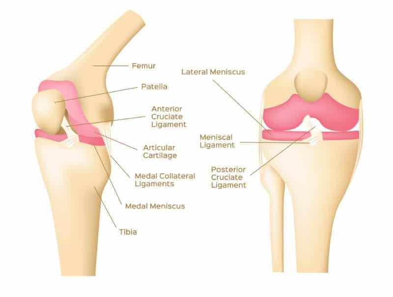 Kniekehlen-Schmerzen • Symptome, Ursachen und Übungen | Liebscher ...