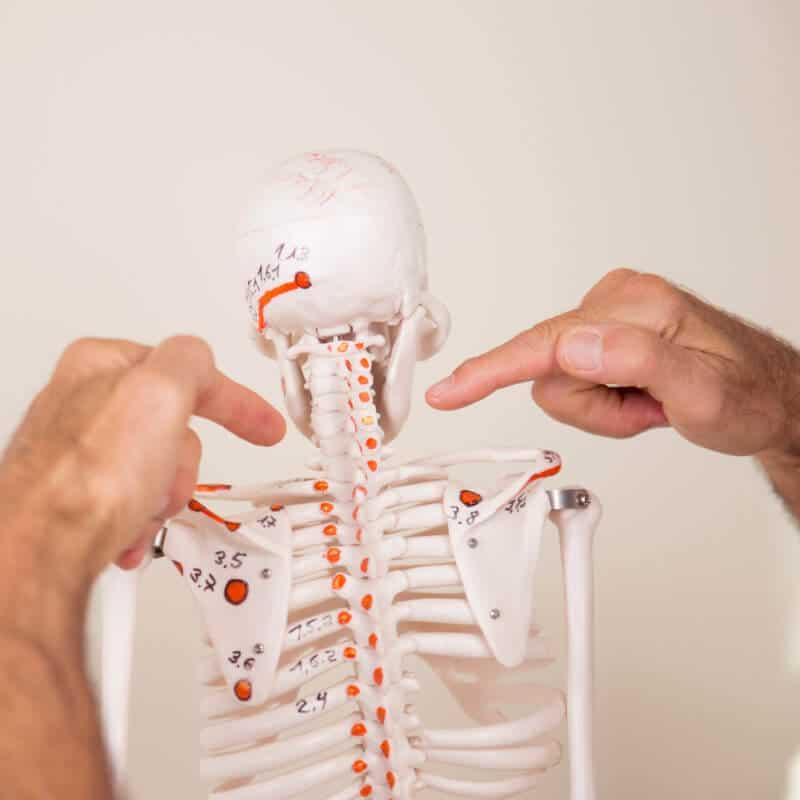 Osteopressurpunkte an der HWS gegen Tinnitus, gezeigt am Skelett.