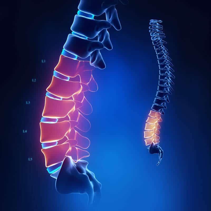 Anatomische Abbildung der Wirbelsäule mit eingefärbtem und bezeichnetem Bereich der fünf Lendenwirbel