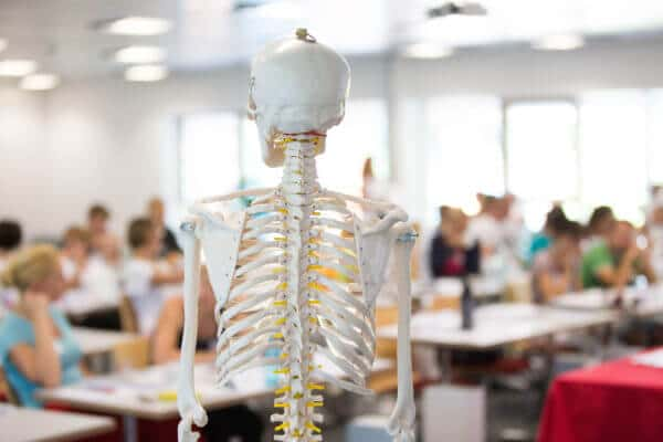 Im Vordergrund ist ein Skelett von hinten zu sehen . Im Hintergrund sind mehrere Personen verschwommen, weil nur das Skelett fokussiert ist.