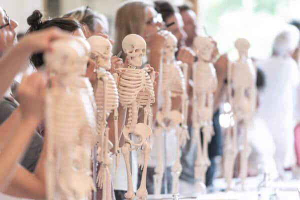 In vorderer Reihe stehen 6 kleine weiße Kunststoff-Skelette und dahinter Personen, die Punkte darauf aufmalen