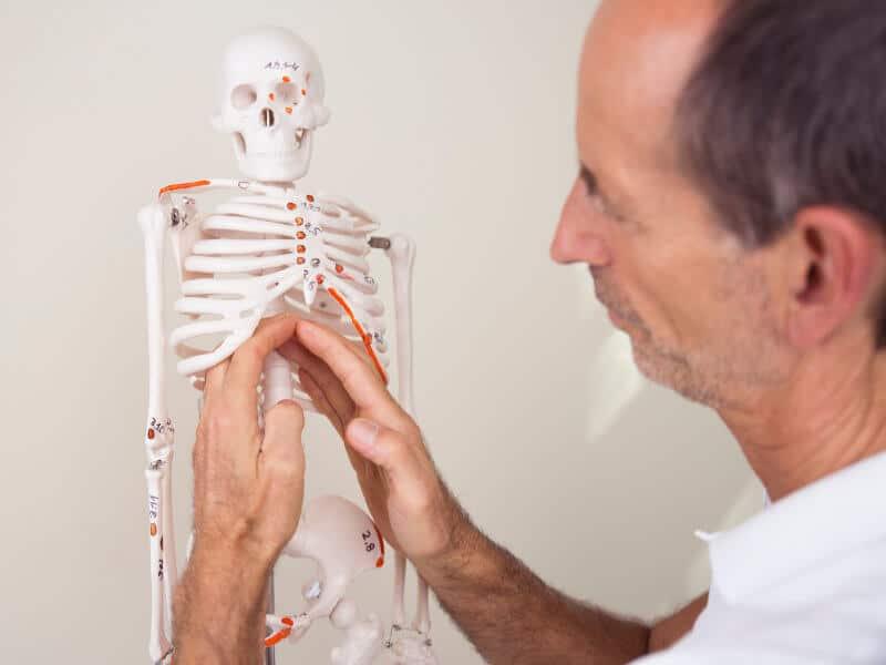 Roland zeigt am Skelett, wo das Zwerchfell liegt, das bei Asthmatikern oft verspannt ist