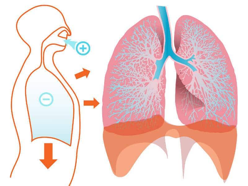 Schematische Darstellung der Lunge und Atemrichtung beim Asthma