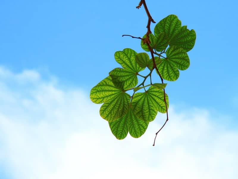 Ast eines Baumes vor blauem Himmel