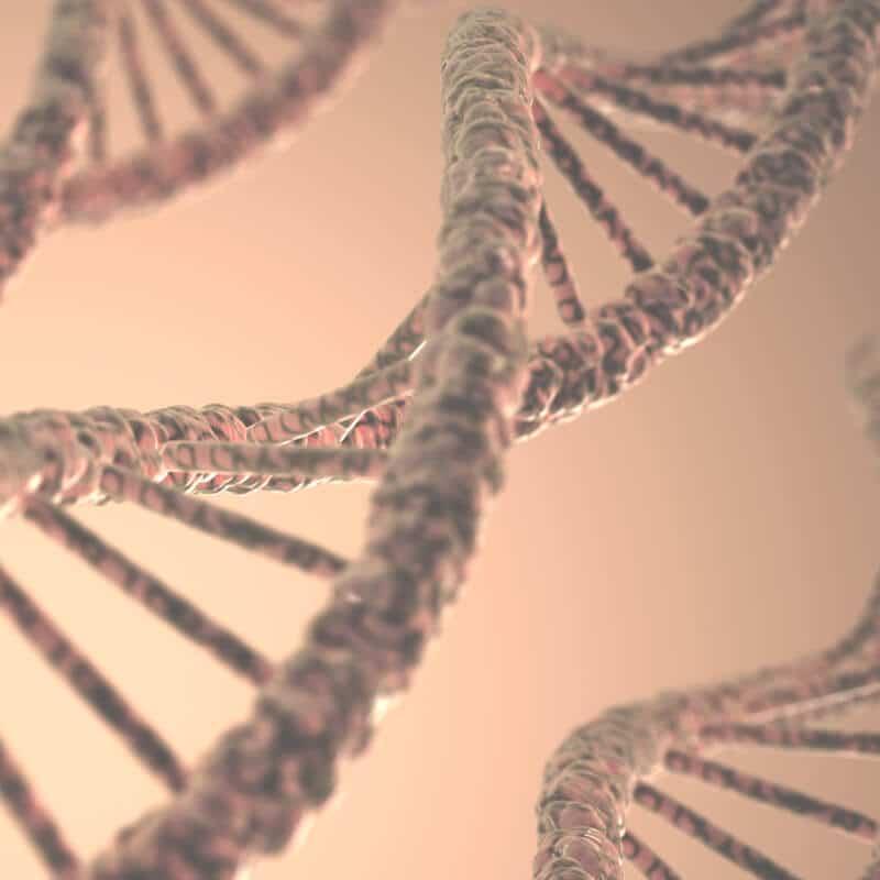 Zu sehen ist das Modell eines DNA-Abschnitts.