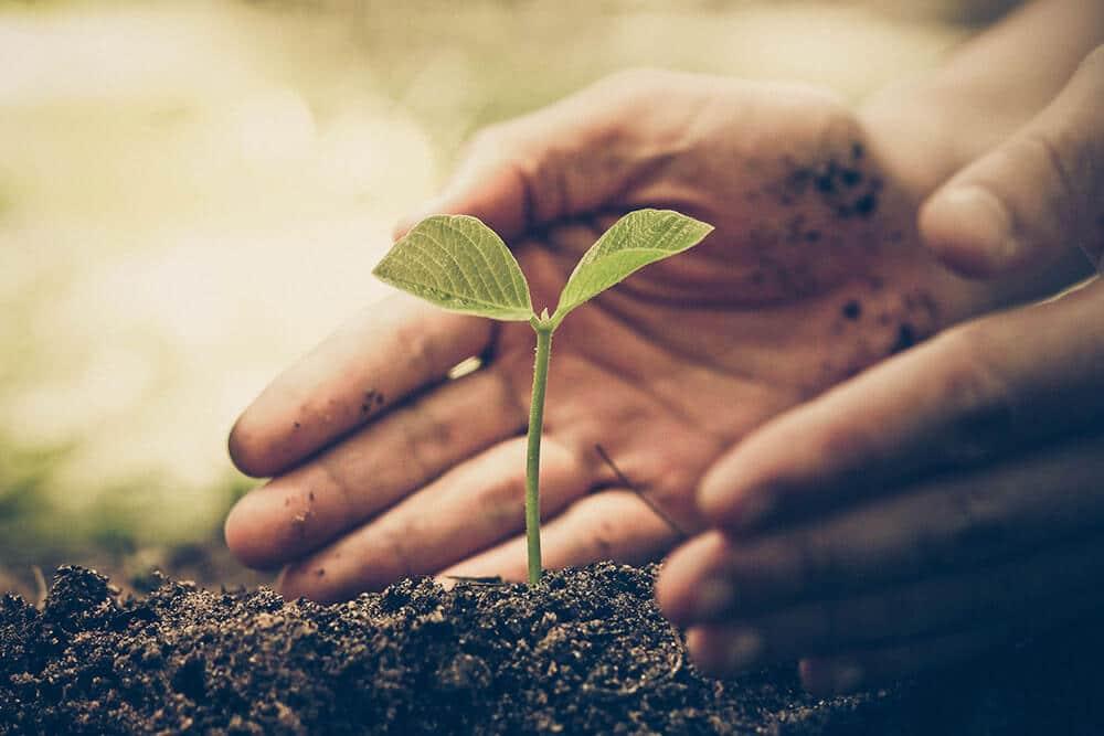 bg image nachhaltigkeit - Pflanzt Bäume