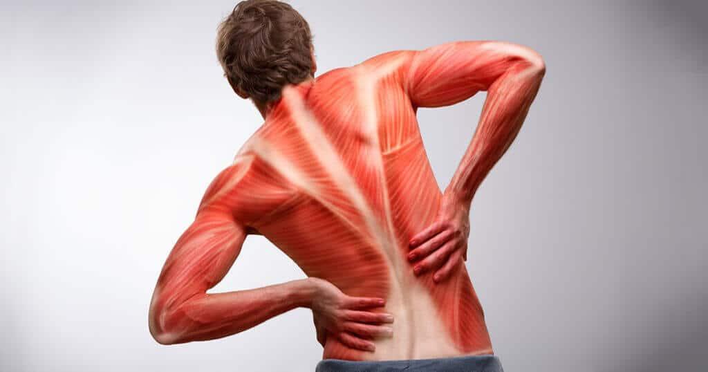 Eine Illustration der Muskeln am Ruecken eines Mannes.