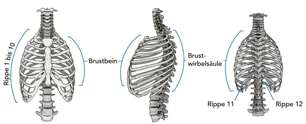 Brustwirbelblockade lösen